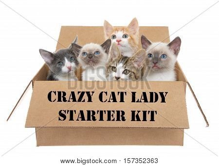 Five assorted kittens in a brown box looking up isolated on a white background. Crazy cat lady stenciled on the side of the box