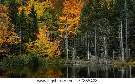 Fall Foliage in Vermont mixed with dead trees and water reflection