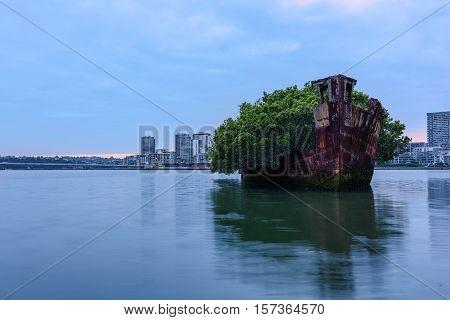 102 year old Shipwrecks of Homebush Bay in Sydney Australia became A Floating Forest.