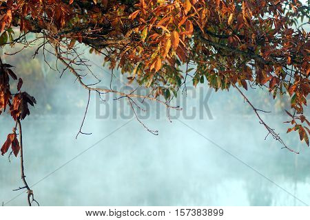 leafy canopy with a misty lake view
