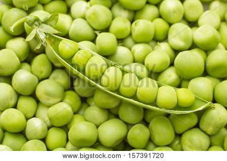 ripe green pea pod on heap peas background