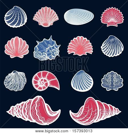 Colorful sea shells set. Sketched shells collection vector