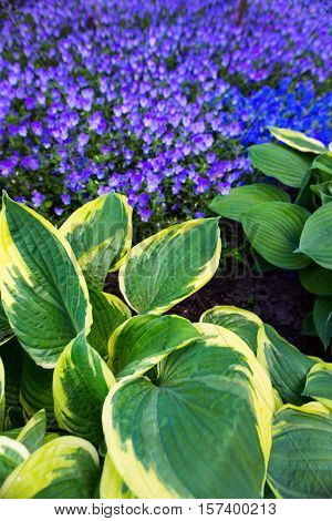 Green Leaves And Blue Flowers.