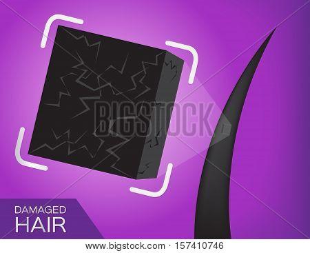dry hair vector . close up on damaged hair