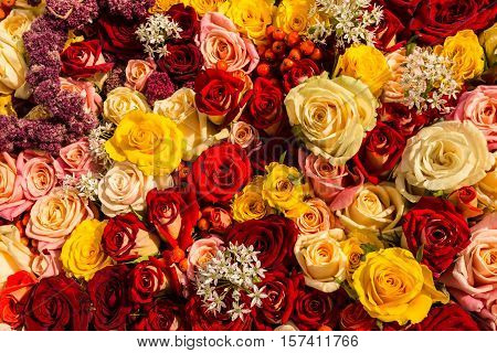 A mixed rose bouquet of different colors as background