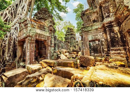 Trees Growing Among Ruins Of Preah Khan Temple In Ancient Angkor