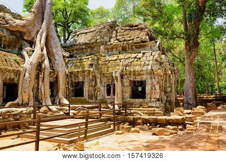 Ta Prohm Temple Has Been Swallowed By Jungle In Angkor, Cambodia