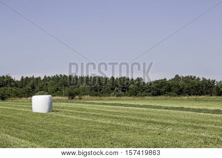 Silage Bale in Agricultural Field with trees and a blue sky in the background.