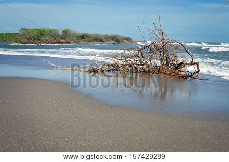 Dry tree rests on the Pacific beach of Las Penitas near Leon, Nicaragua. It was brought in to the coast after huge waves hit the Pacific shore in May 2015