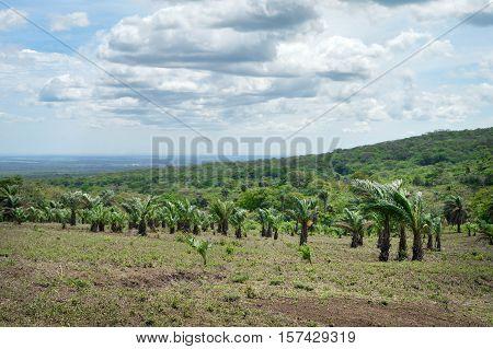 Beautiful volcanic landscapes of San Jacinto with palm trees plantation near Leon Nicaragua