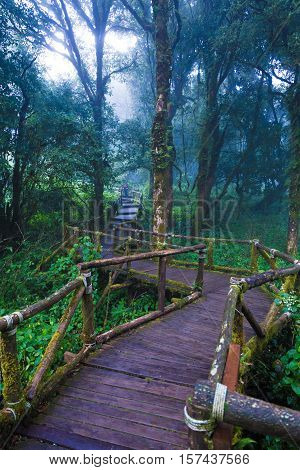 Moist old wooden pathway in tropical rain forest top of Doi Inthanon mountain in Chiang Mai Thailand