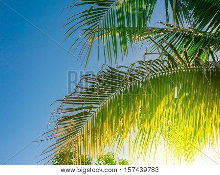Green Leaf Coconut At Sunshine