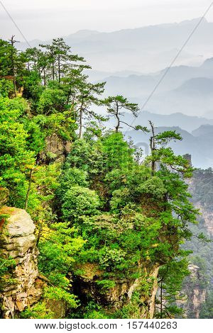 Scenic View Of Trees Growing On Top Of Rock, Avatar Mountains