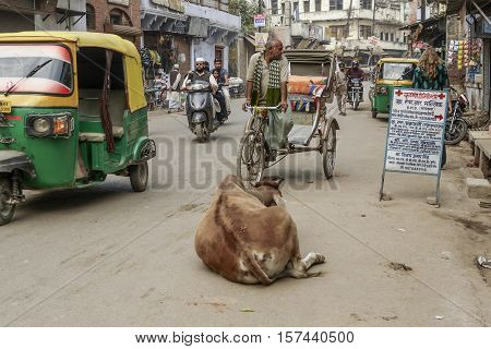 VARANASI INDIA - DEC 10 2010: cow relaxes at the street and all people have to give way to the cow.