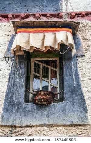 Dead yak head outside a window in a  traditional tibetan home in one of the small tibetan villages, Central Tibet