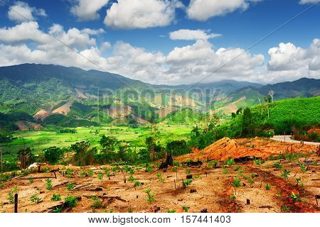 Amazing View Of Scenic Mountains And Bright Green Rice Fields