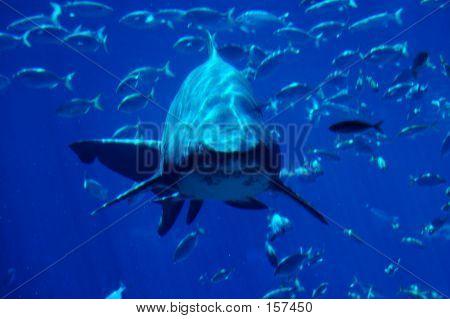 Shark Spotting #2