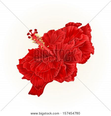 Red hibiscus corrugated simple tropical flower vintage vector illustration