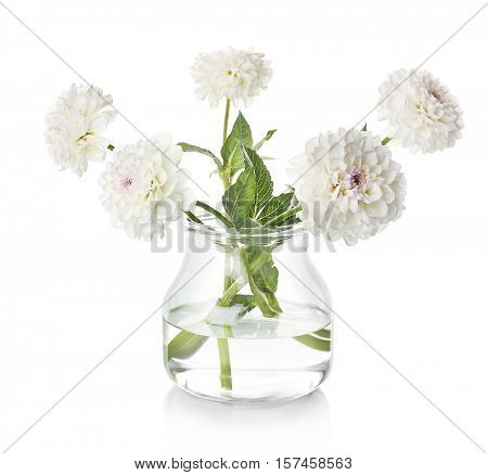 Beautiful white dahlia flowers in vase, isolated on white