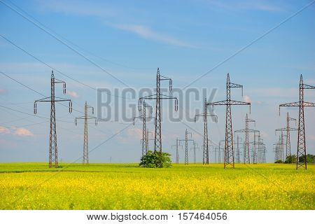 field of rapeseed (brasica napus) and high voltage pole