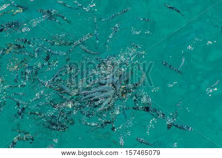 Shoals of fish in the water. Beauty of nature.