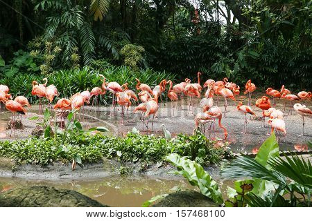 Beautiful flamingos in nature. A huge flock of flamingos drinking water near the lake