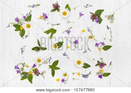 Top view on beautiful wild flowers on white wooden background. Summer flowers leaves and petals. Clover daisy bell-flowers forget-me-not. Flat lay