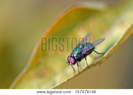The fly sitting very still on a leaf.