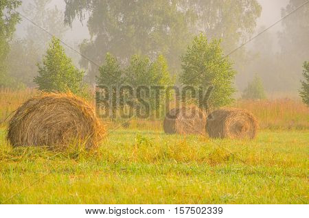 straw in the morning mist. Morning landscape in summer thick fog. dense fog in the morning.  early morning. forest hiding in the fog.