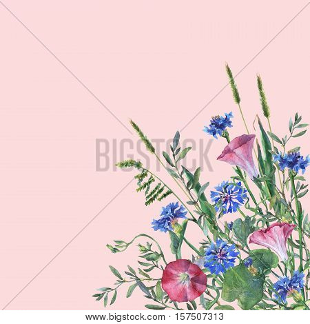 Colorful spring flowers and grass on a meadow. Watercolor hand painting illustration on isolate pink background.