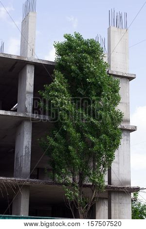 large tree near abandoned unfinished high-rise High-rise construction