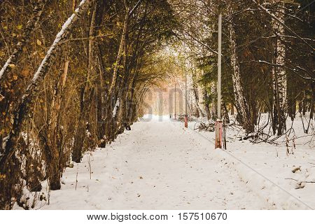 Footpath in pine winter wood. Wildlife of Siberia.