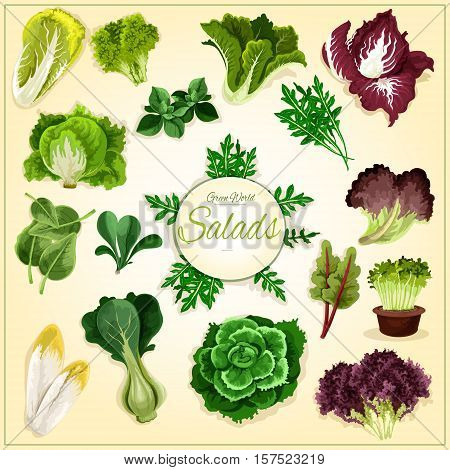 Salad leaf and vegetable greens poster with fresh healthy lettuce, chinese cabbage, spinach and bok choy, cress salad, iceberg lettuce and arugula, chicory and corn salad, batavia, radicchio and chard, sorrel