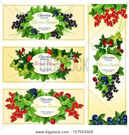 Summer berry banner with fruit frames, surrounded by strawberry, cherry, blueberry, raspberry, red and black currant, gooseberry and briar with leaves on stems. Food label, badge, emblem design