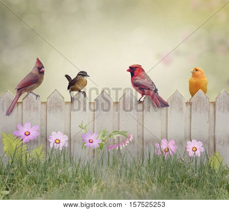 Backyard Birds Perching on Wooden Fence