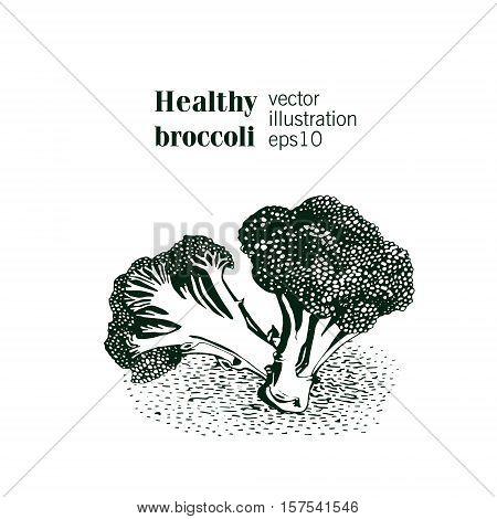 Hand drawn broccoli illustration. Inteligent style. Vector
