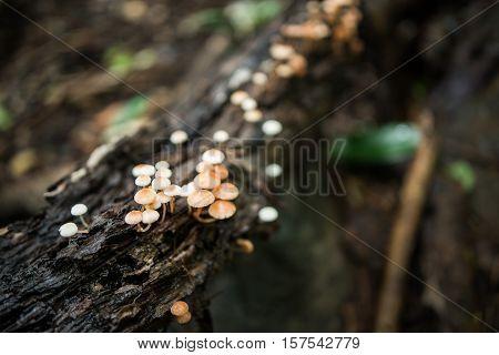 Mushrooms on tree, forest mushrooms, gathering mushroom, mushrooms on trunk, wild fungus. Soft focus