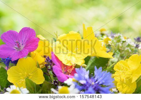 bouquet of garden flowers with evening primrose