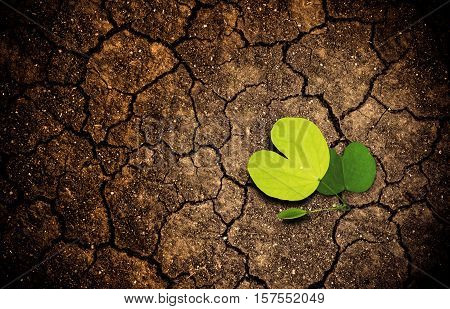 Plant sprouting on dried arid cracked soil ground. concept of beginning and hope
