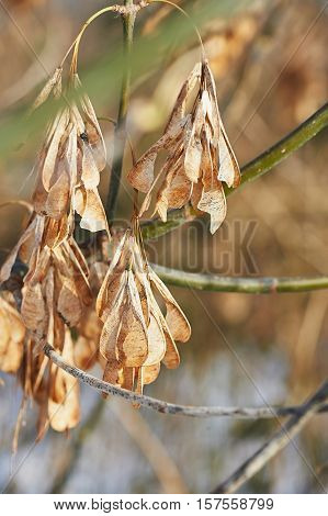 The dry leaves on the branches. Withering of nature. The dried flowers