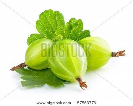 Gooseberry isolated on white background. Heap of green ripe gooseberry with leaf isolated on white background. Gooseberry closeup