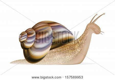 a real snail on a white background