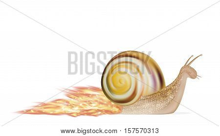 a speed snail on a white background vector