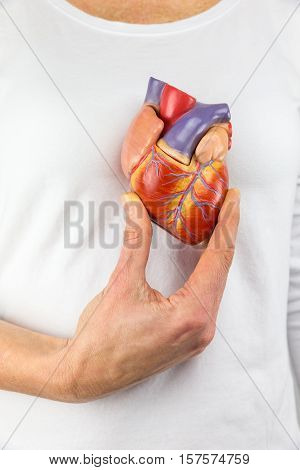 Female hand showing artificial heart model in front of human body