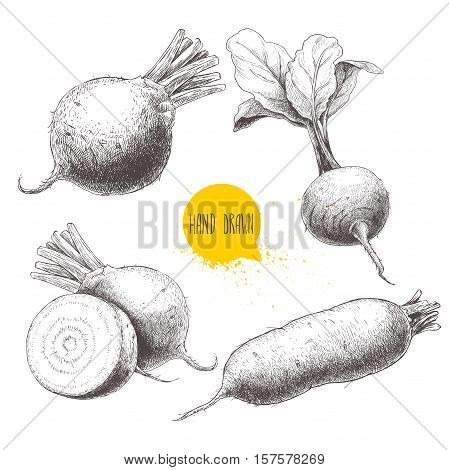 Set of hand drawn beet root. Beet with leafs half of beet long beet. Sketch vintage vector illustration.