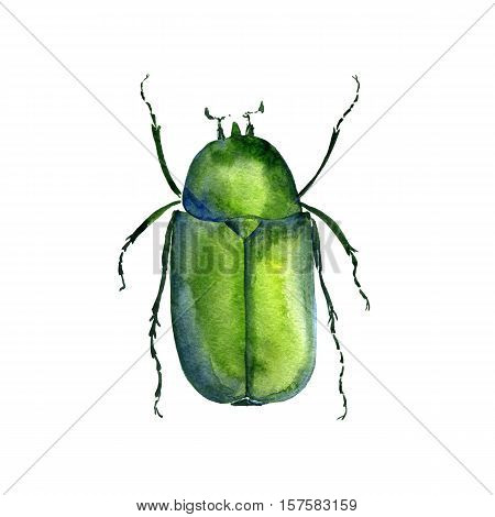 watercolor drawing chafer, green bug, hand drawn insect, beetle poster
