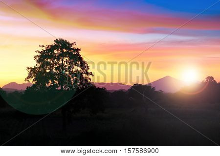 sunset and light Fair Sun on sky and cloud colorful beautiful with silhouette motion tree in woodland : with copy space for add text.