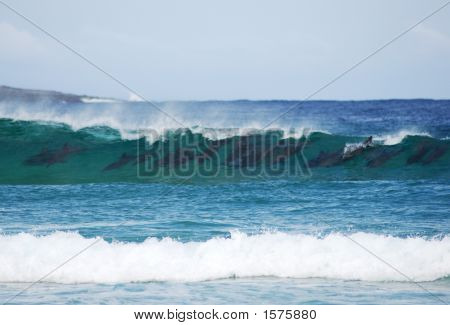Dolphins In Wave