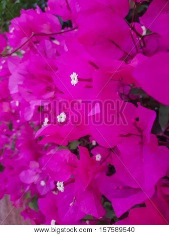 Bright summer flowers, the beauty of nature.