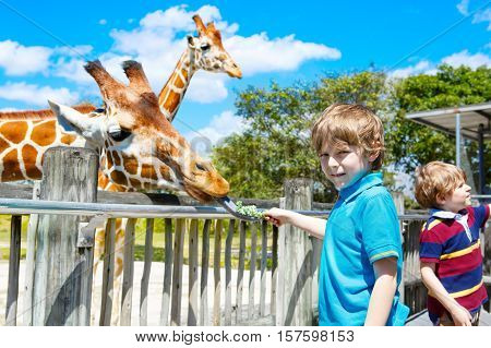 Two little kids boys, sibling brothers, twins and best friends watching and feeding giraffe in zoo. Happy children, family having fun with animals safari park on warm summer day.